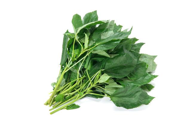 モロヘイヤ|野菜